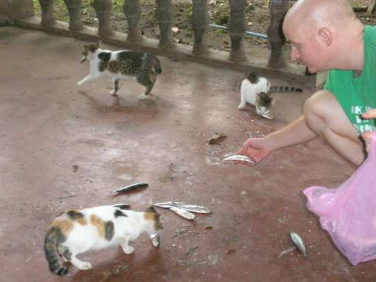 Jesse feeding fish to the cats at his cat sanctuary